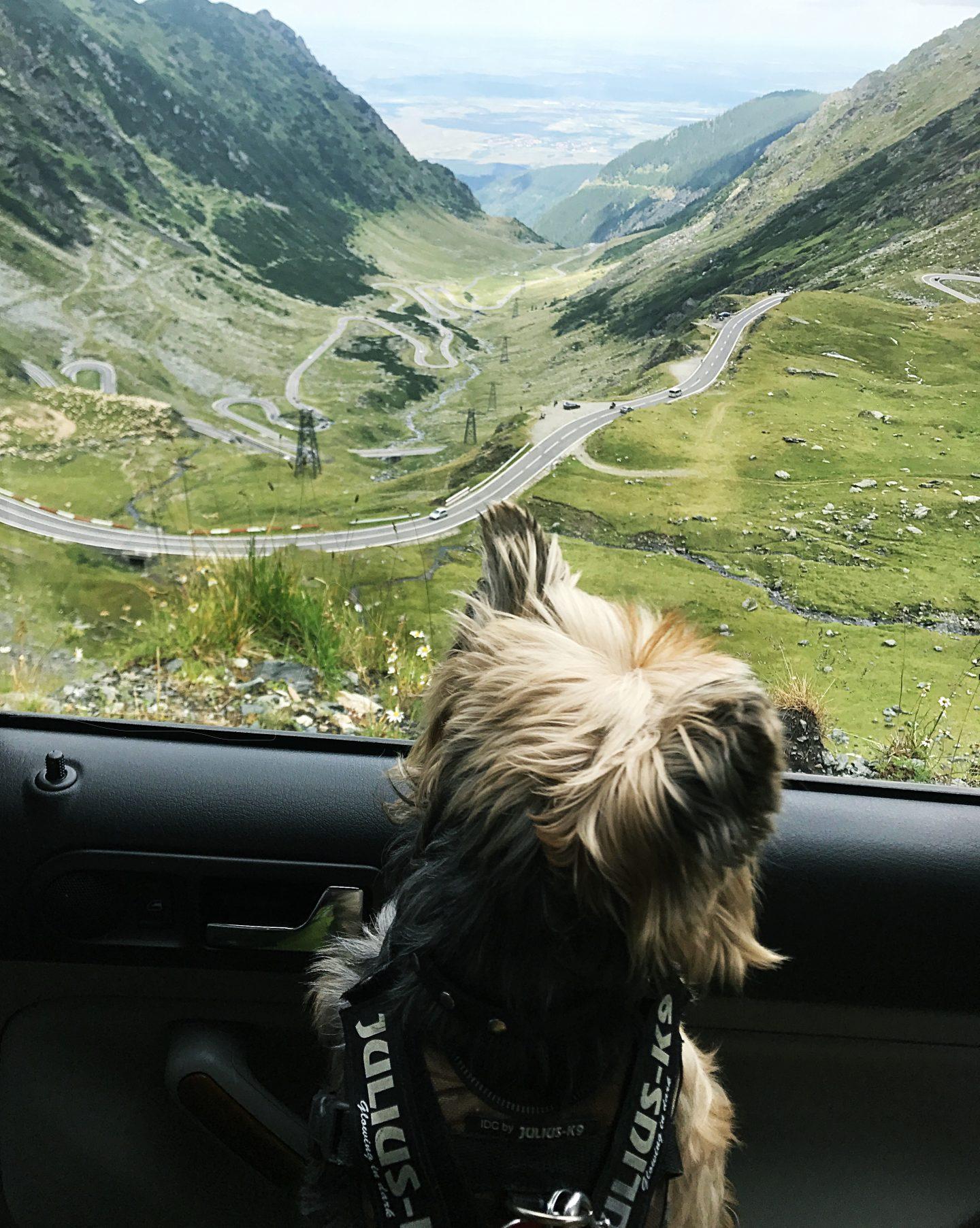 Dog Vlog – Transfagarasan Romania 4K